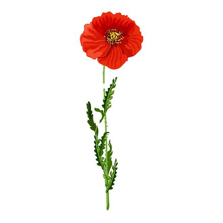 flower%20on%20white_edited.png