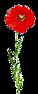 flower%252520on%252520white_edited_edite