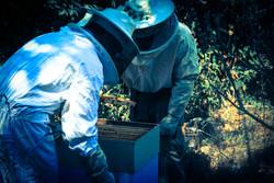 beekeeping-terra-alta-portugal.jpg