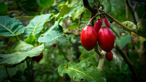 fruits-nature-terra-alta-portugal.jpg