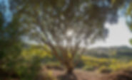 Terra Alta 15 (16).jpg