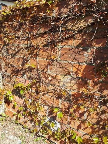 Mur bourg eysines E.P.B.E Sauvons le bou