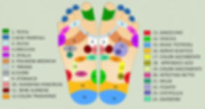 mappe zone riflessologia plantare Centro Estetico Body Center Emotions di Dueville ( Vicenza )