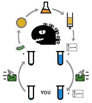 Plasmid DNA flowchart