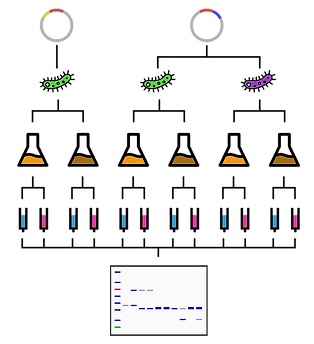 Protein expression and purification screen