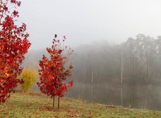 The Seasons of Linga Longa