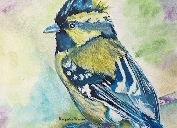 Bluejay Bird watercolor painting