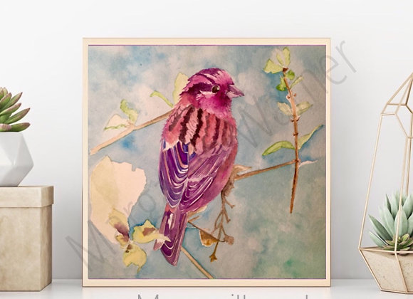 Rose Finch Bird Watercolor Art
