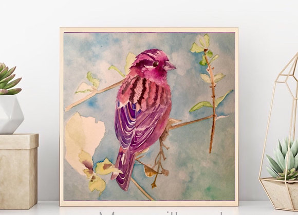 "Rose Finch Bird Watercolor Art 8x8"""