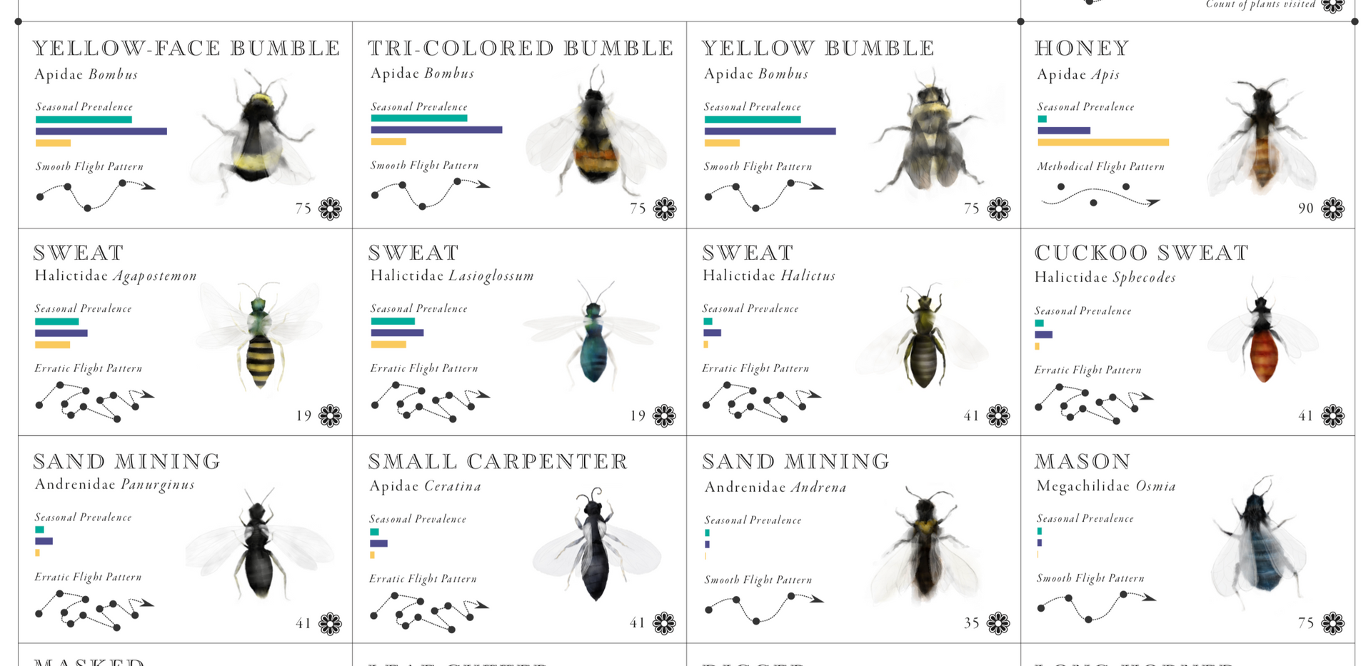 Pacific NW Bees