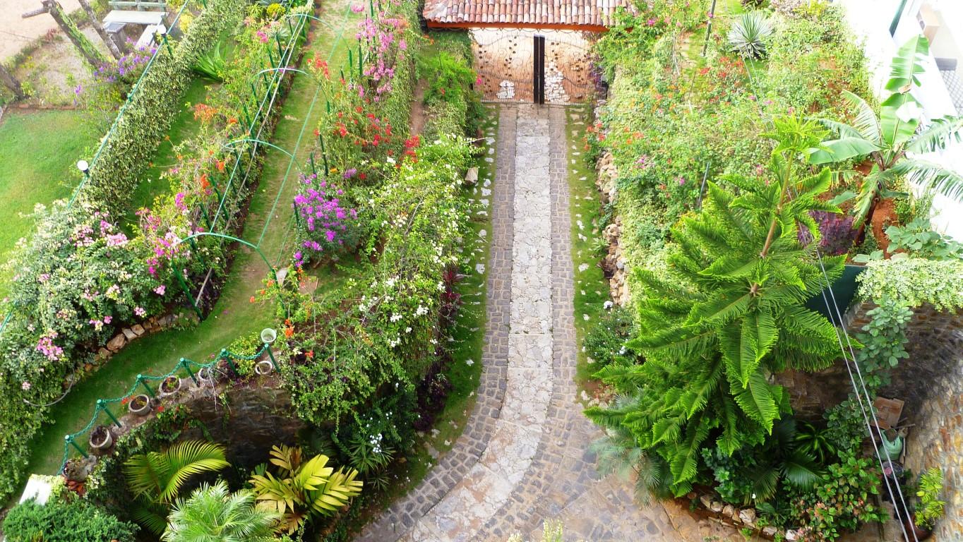 Bougainville garden