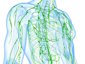 Keeping up to date in the fast moving world of lymphatics