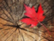 Fall_Canada.jpg