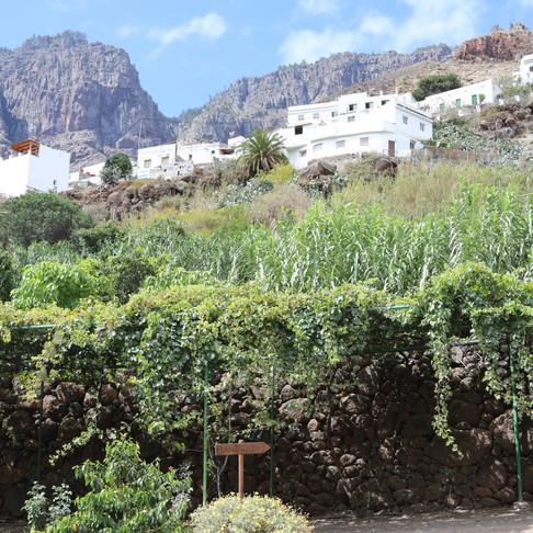 La Finca Castanos: a rare coffee plantation in Europe