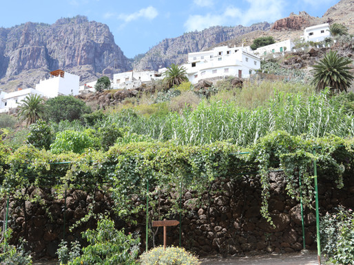 La Finca Castanos: a coffee plantation in The canary island's