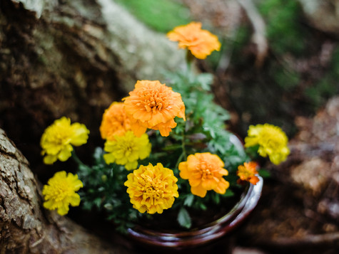 Meaning of Marigolds