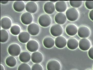 Hva er en blodcelleanalyse?