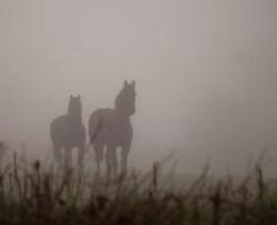 Boys in the mist