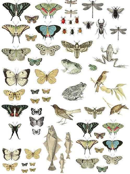 """Entomology Etcetera, 24"""" x 33"""""""