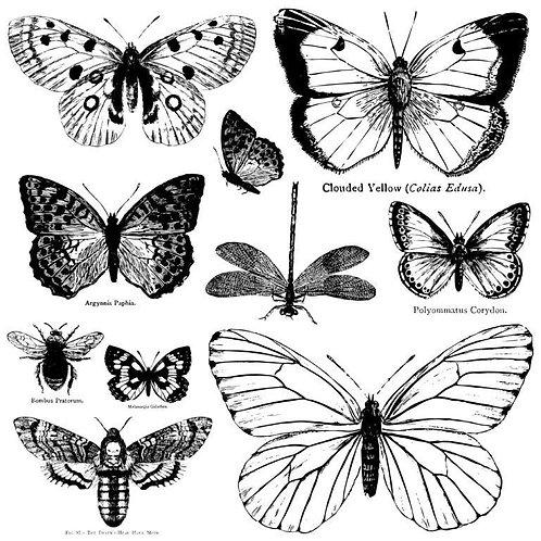 """Butterflies, 12"""" x 12"""""""