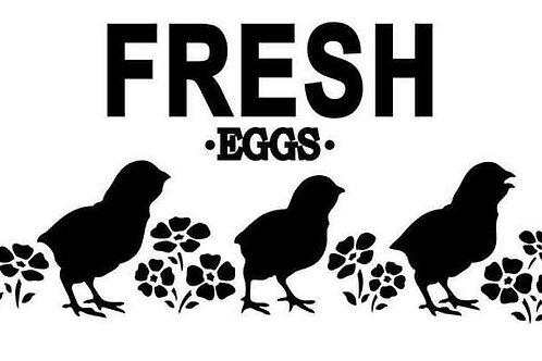 "Fresh Eggs JRV 12"" x 7"""