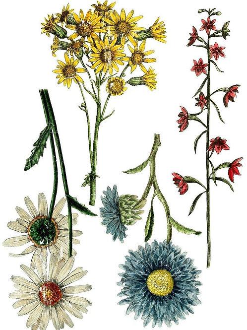 """Wild Flower Botanicals, (Retired) IOD, 24"""" x 33"""""""