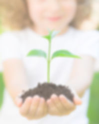Kid holding young plant in hands against