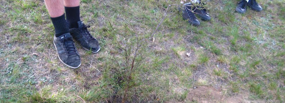 Tree planting 16 Oct 2015 (9).JPG