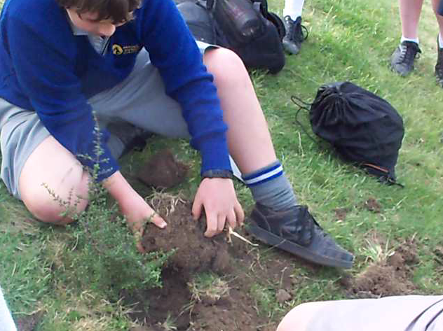 Tree_planting_6.png