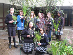 green team  plants 006