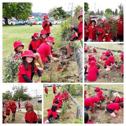 Taupo School 1 - 2020