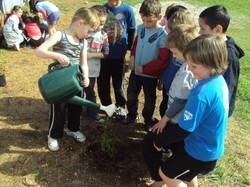 planting trees 007