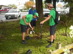 tree planting, dogs, sofa 019