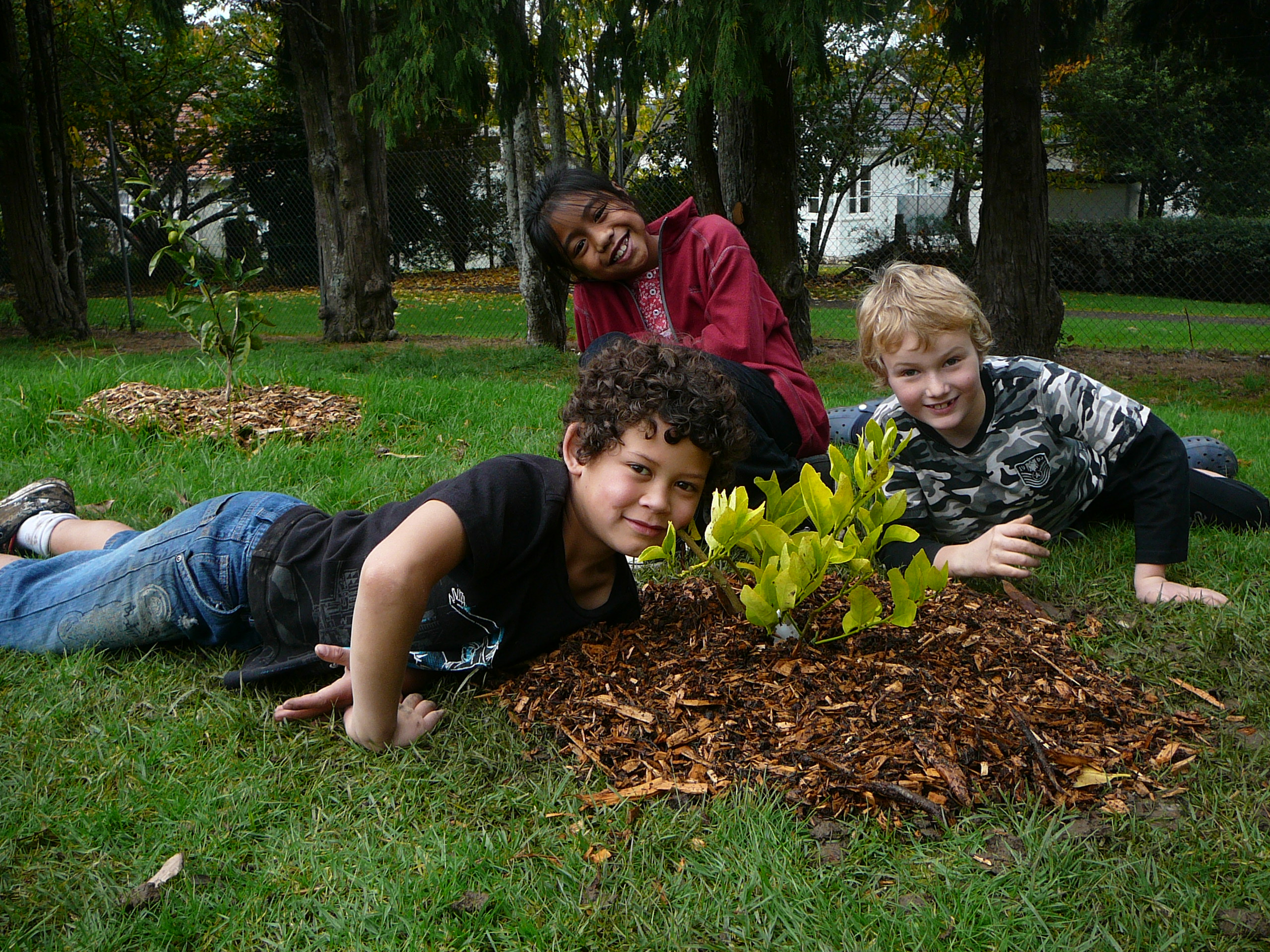 Owairaka School planted - Mt Albert - Auckland City