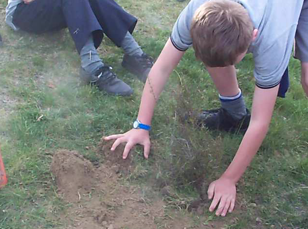 Tree_planting_5.png