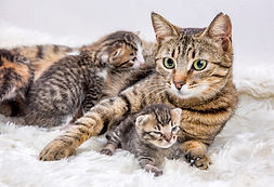 Mom (mother) cat and baby cat (kitten).j