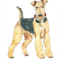 Airedale Line Drawing coloured auto corr