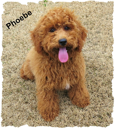 Phoebe1.png