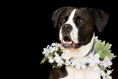 dog-3389334_1920.jpg