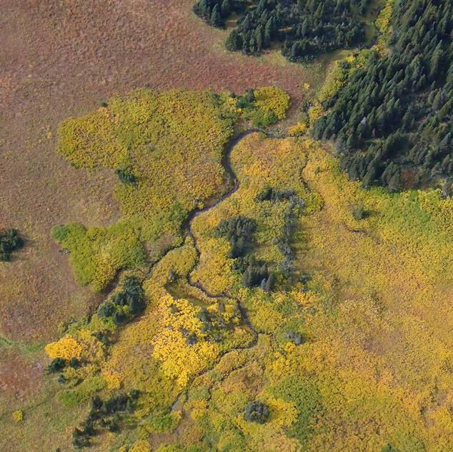 Sukunka Valley wetland