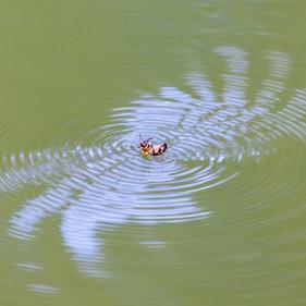 Bee in distress