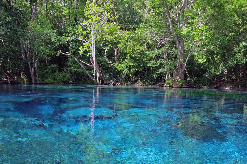 Inside Holmes Creek rests one of the most beautiful cold springs in Florida known as Cypress Spring.