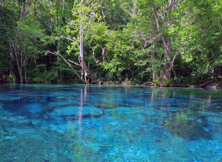 Top 5 Ecotourism Destinations in Panama City Beach