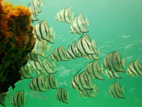 Best Place To Snorkel Or Scuba Dive In Navarre, FL