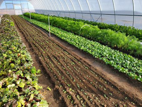 Weekly CSA Newsletter Dec. 7th, 2020