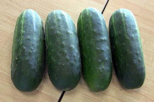Cucumber - Max Pack Cucumber Seedling