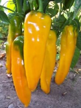 Peppers - Yellow Marconi Sweet Pepper