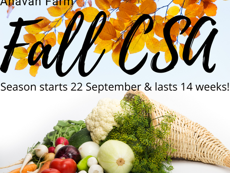 LIMITED AVAILABILITY (only 50 spots left)! Join Our Community Veggie-Share Program (CSA)!