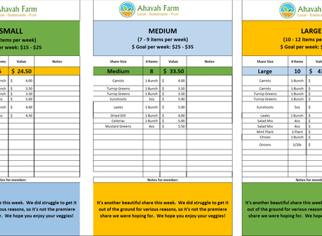 Week 3 Bag Packing List and Extras