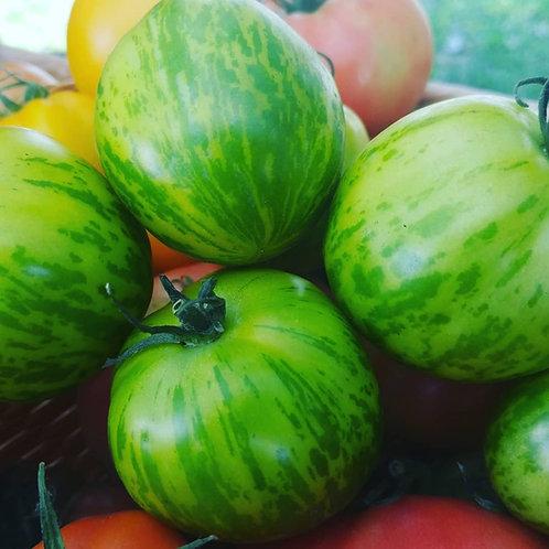 Tomatoes - Green Zebra Tomato Plant Seedling